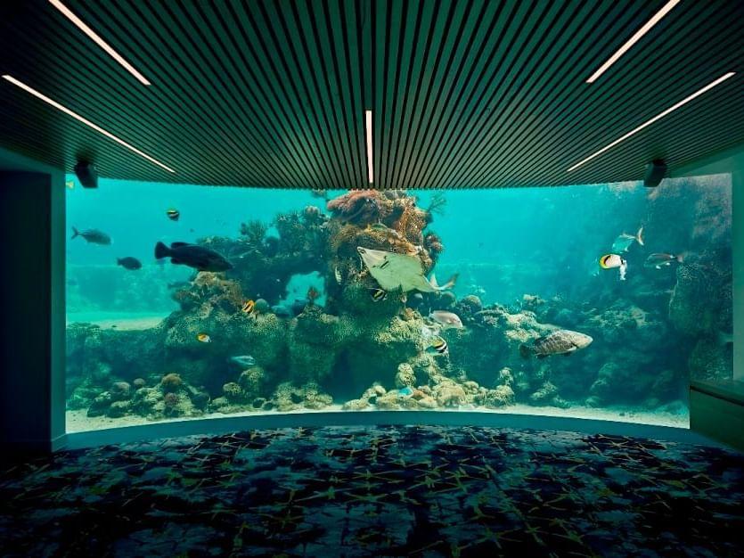 Underwater Observatory at Daydream Island Resort