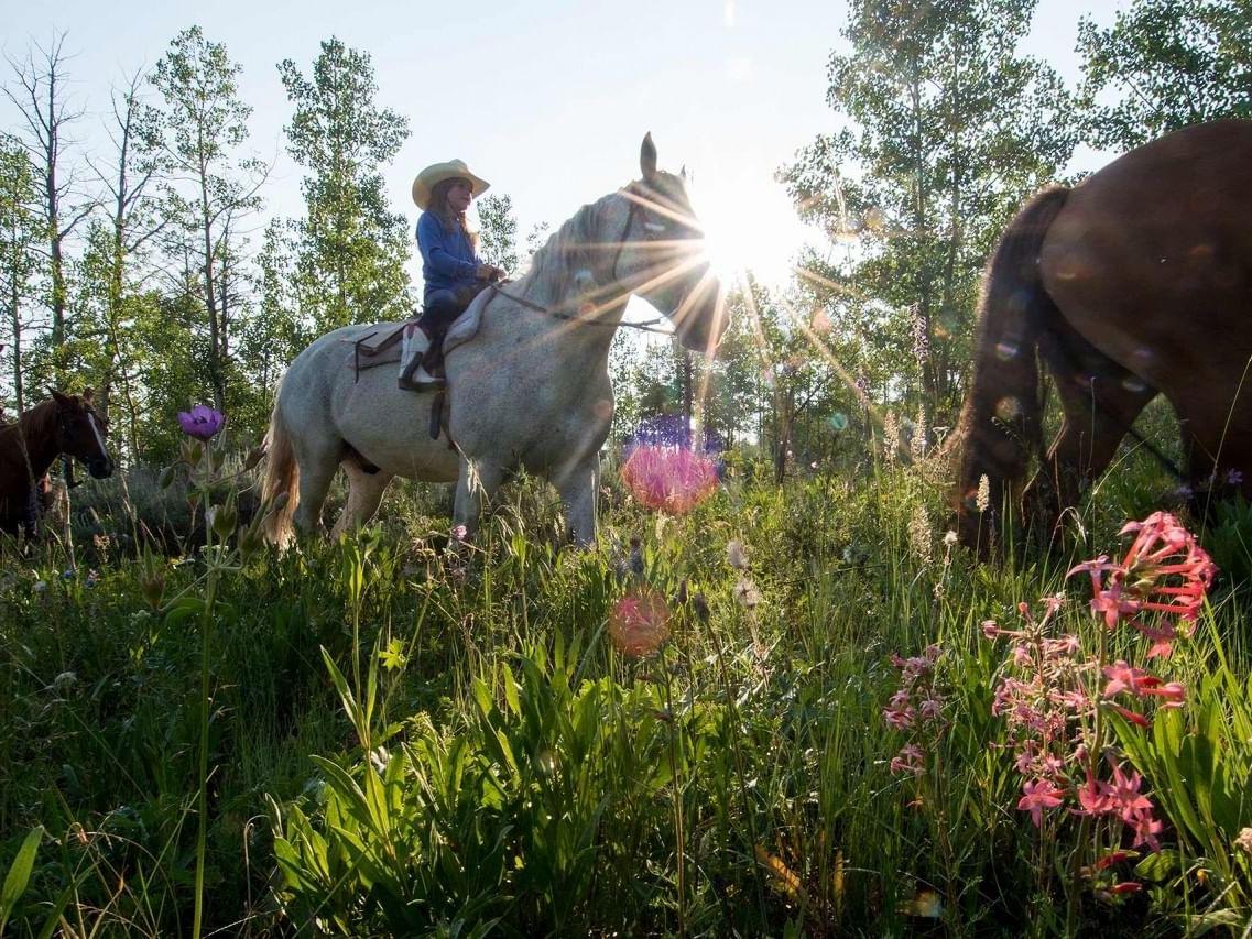 Horseback riding Jackson Hole Wyoming