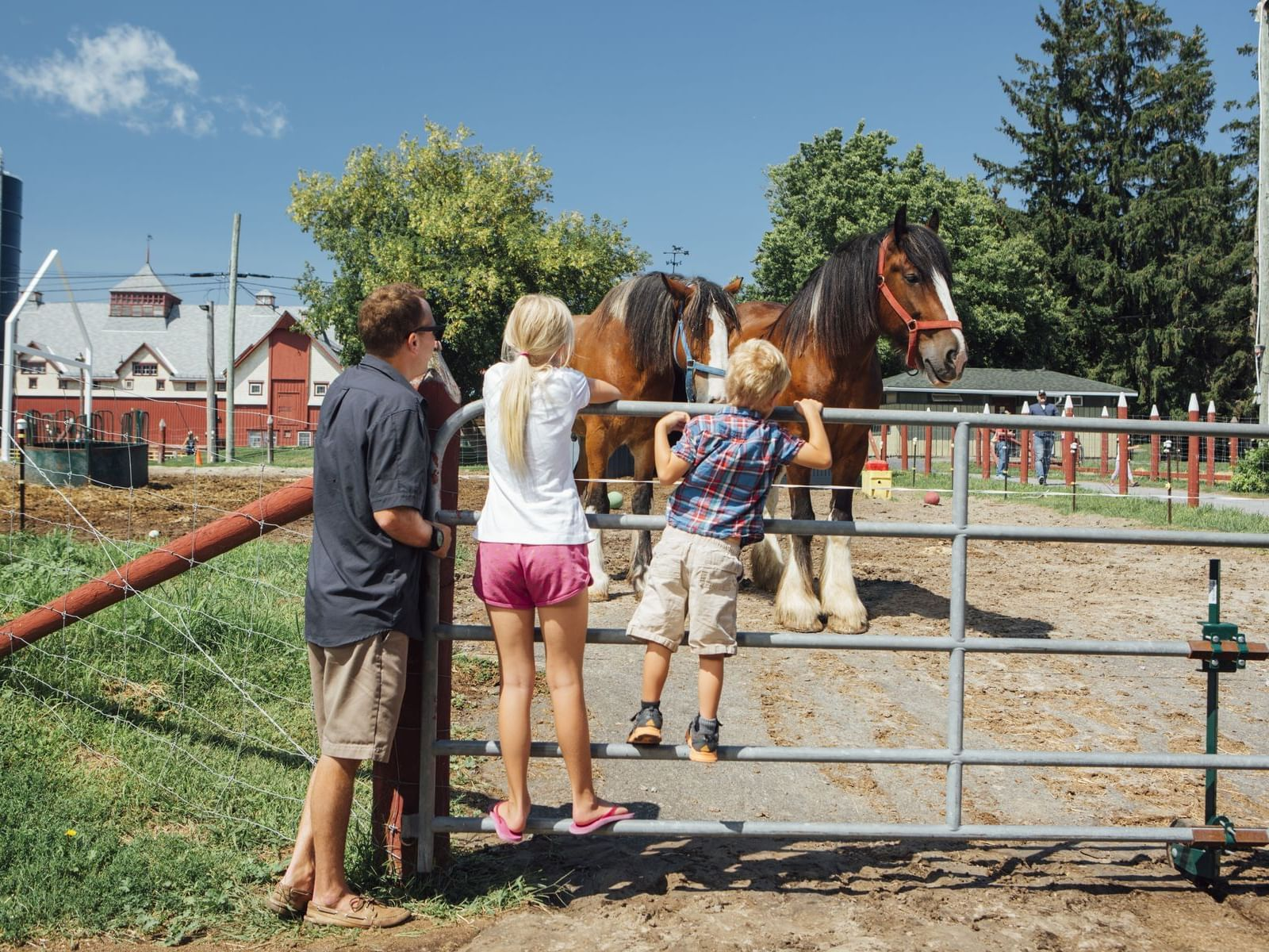 family looking at horse