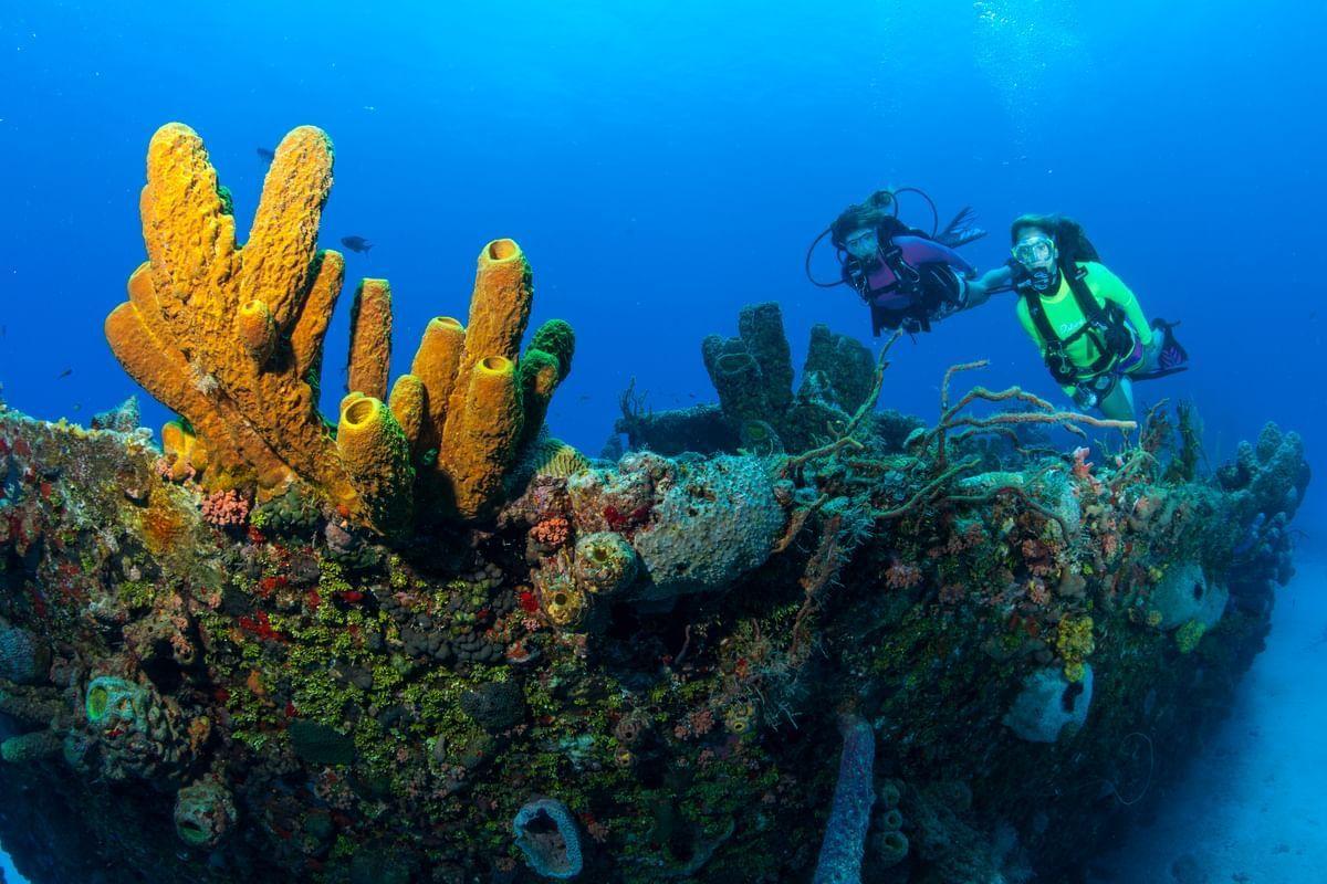 Scuba Diving at Butler Bay