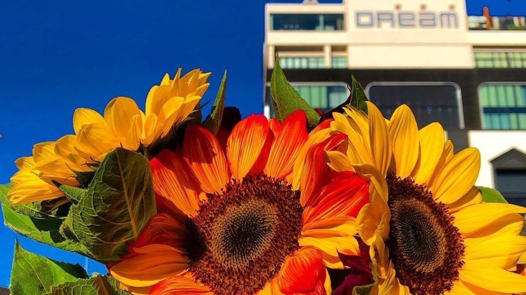 Dream Hotel front view with three Sun flowers.