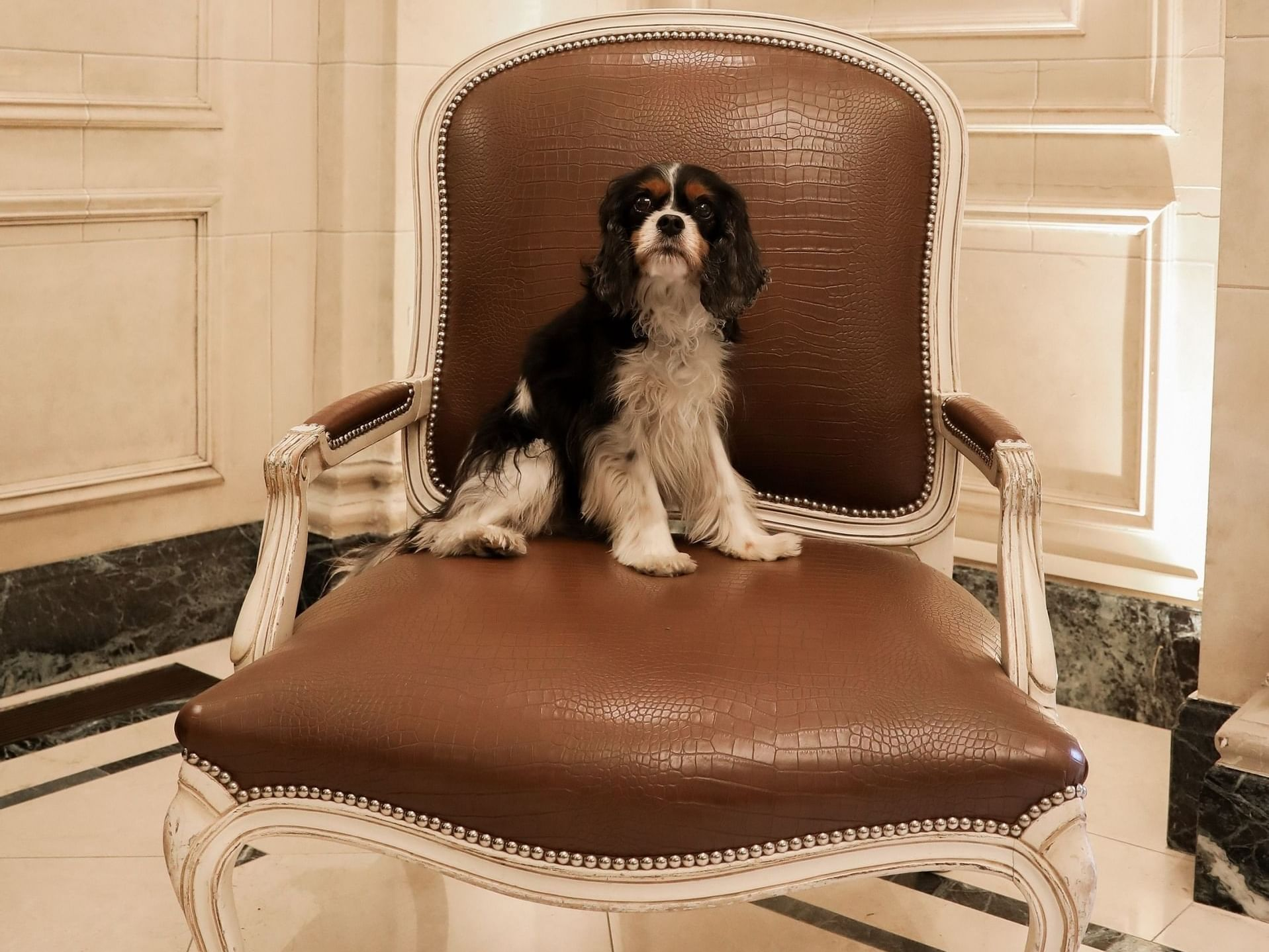 A black and white puppy sitting on a large chair.