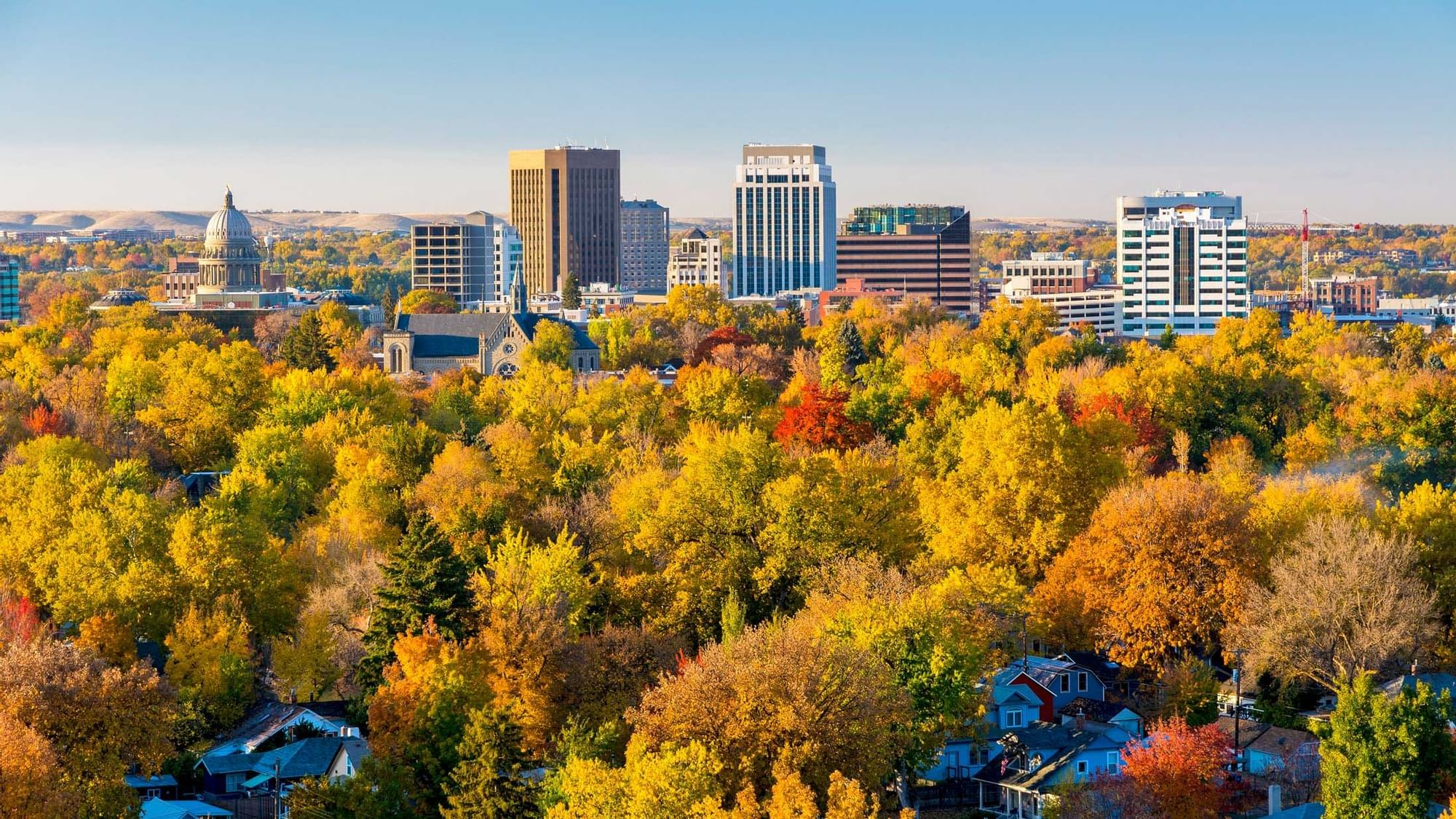 colorful trees on the outskirts of a city