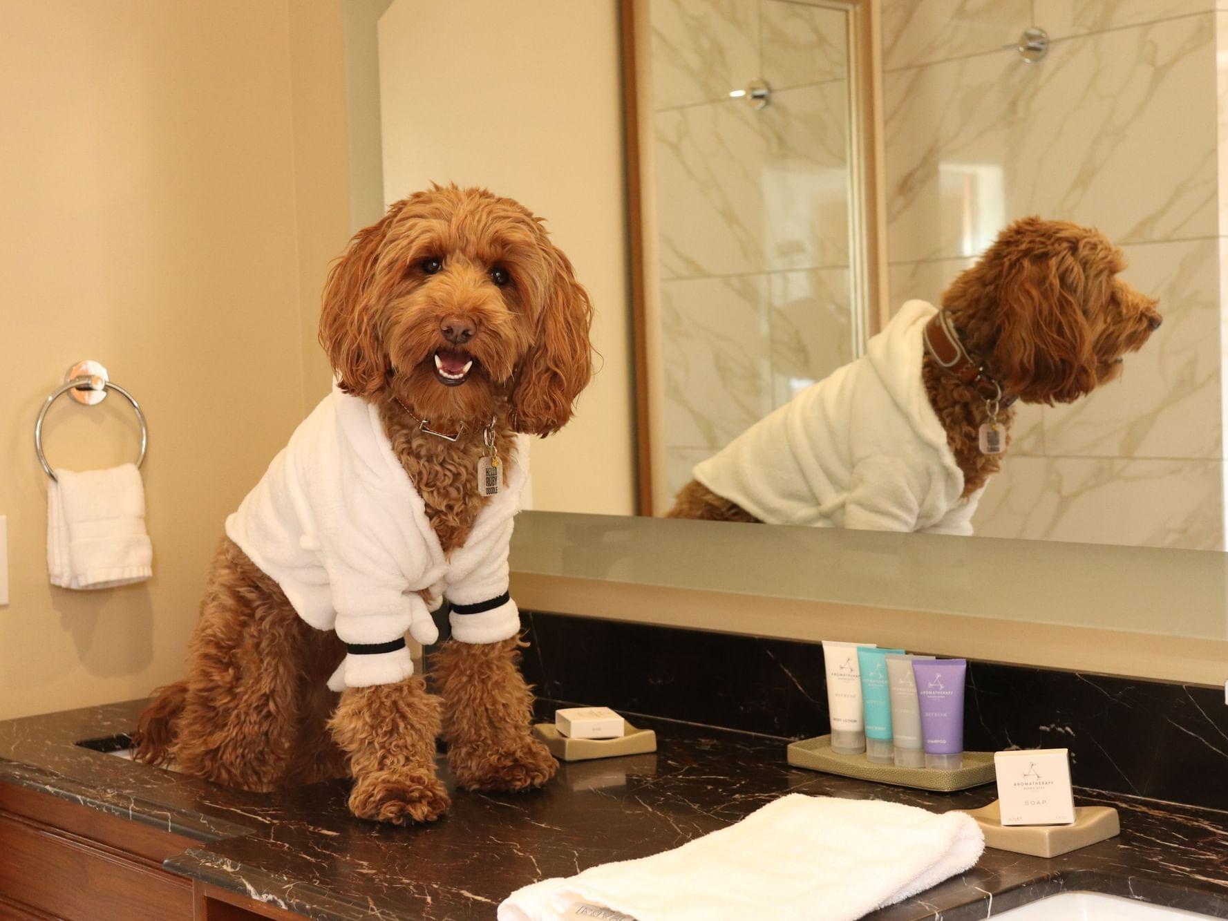 Medium sized dog wearing robe while sitting on bathroom vanity
