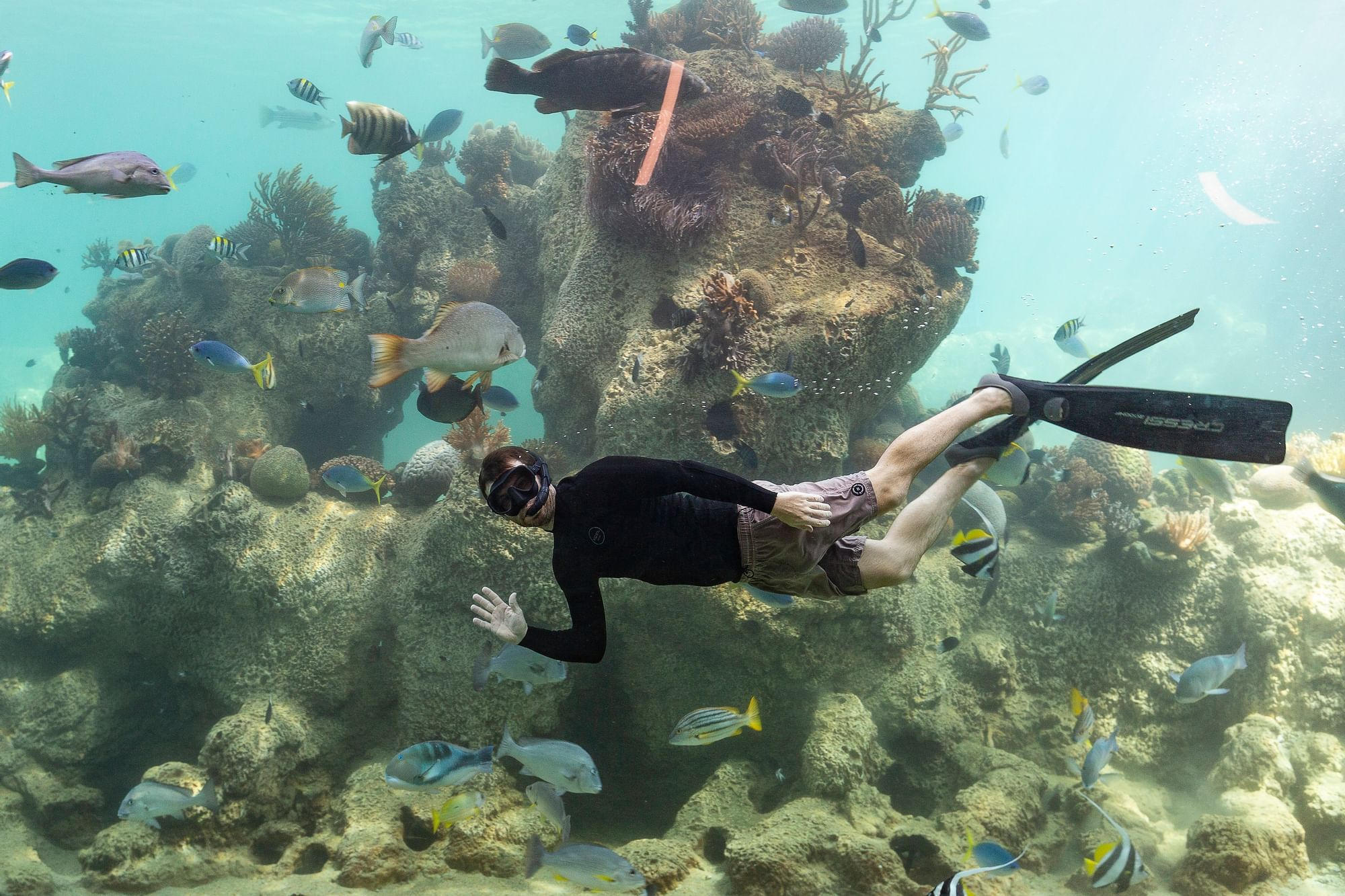 Person Snorkeling in reefs near Daydream Island Resort