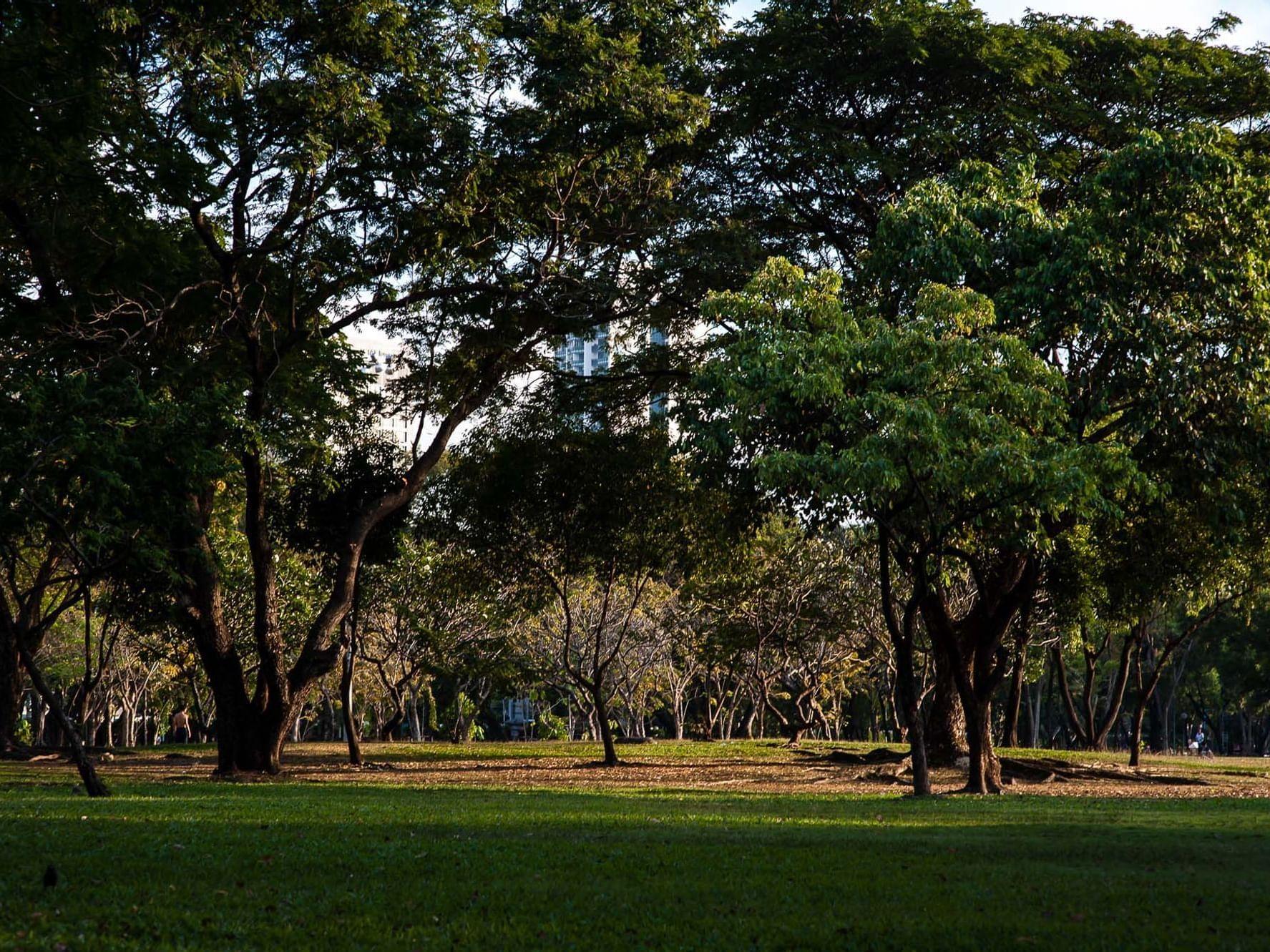 Lumpini Park near Chatrium Hotel Riverside Bangkok