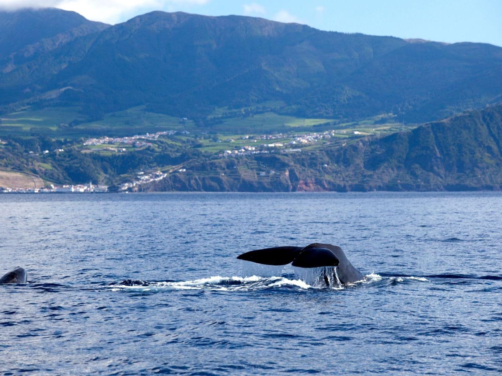 Obervação de Baleias
