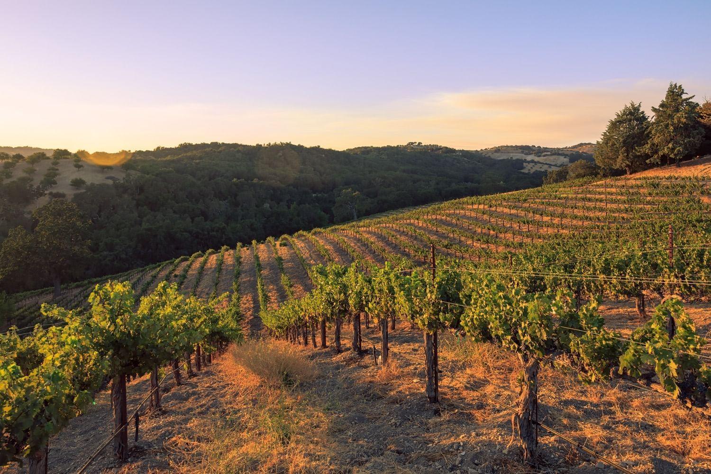 Vineyard at Allegretto Vineyard Resort in Paso Robles