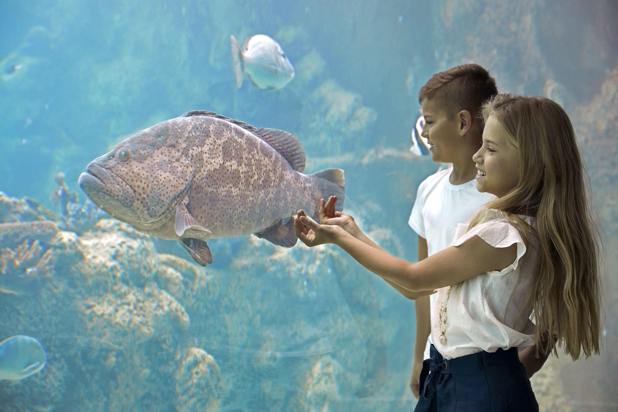 Kids in Underwater Observatory at Daydream Island Resort