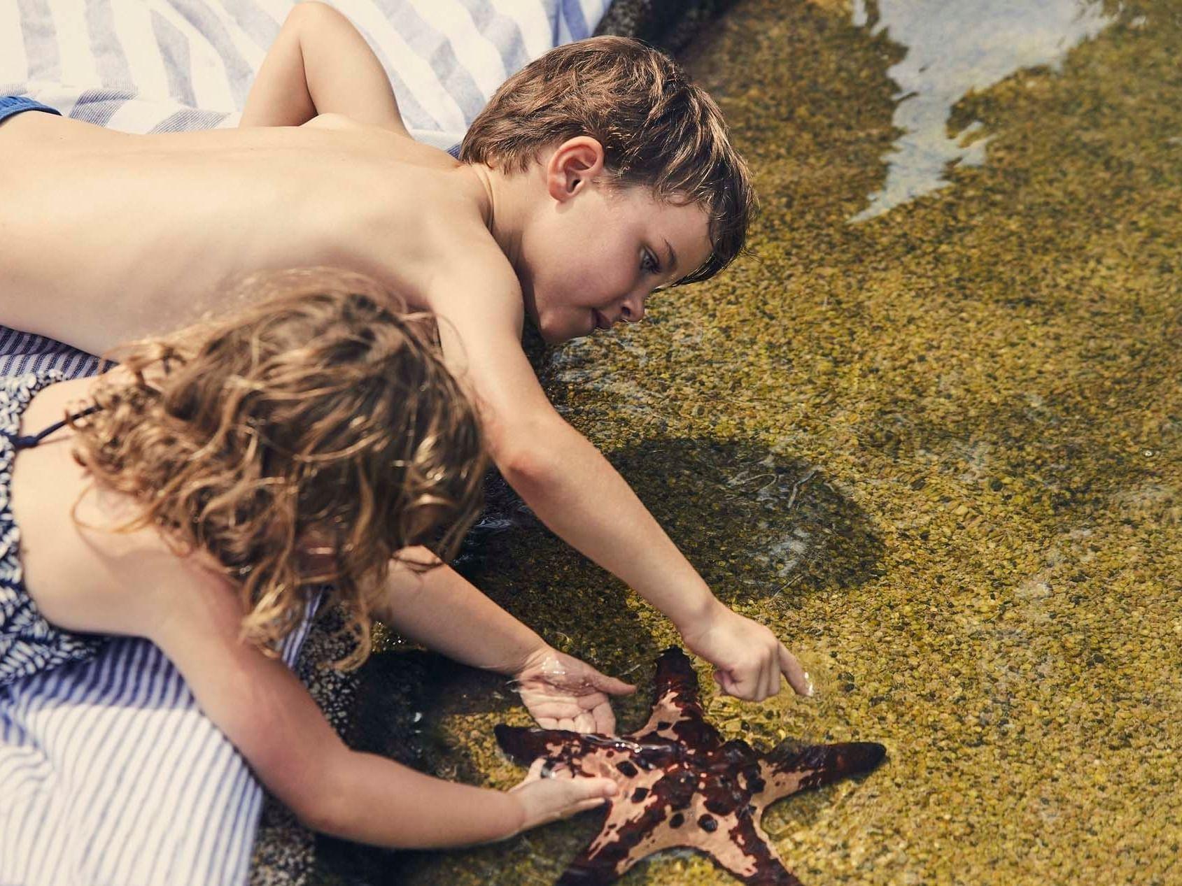 Kids feeding to starfish at Daydream Island Resort