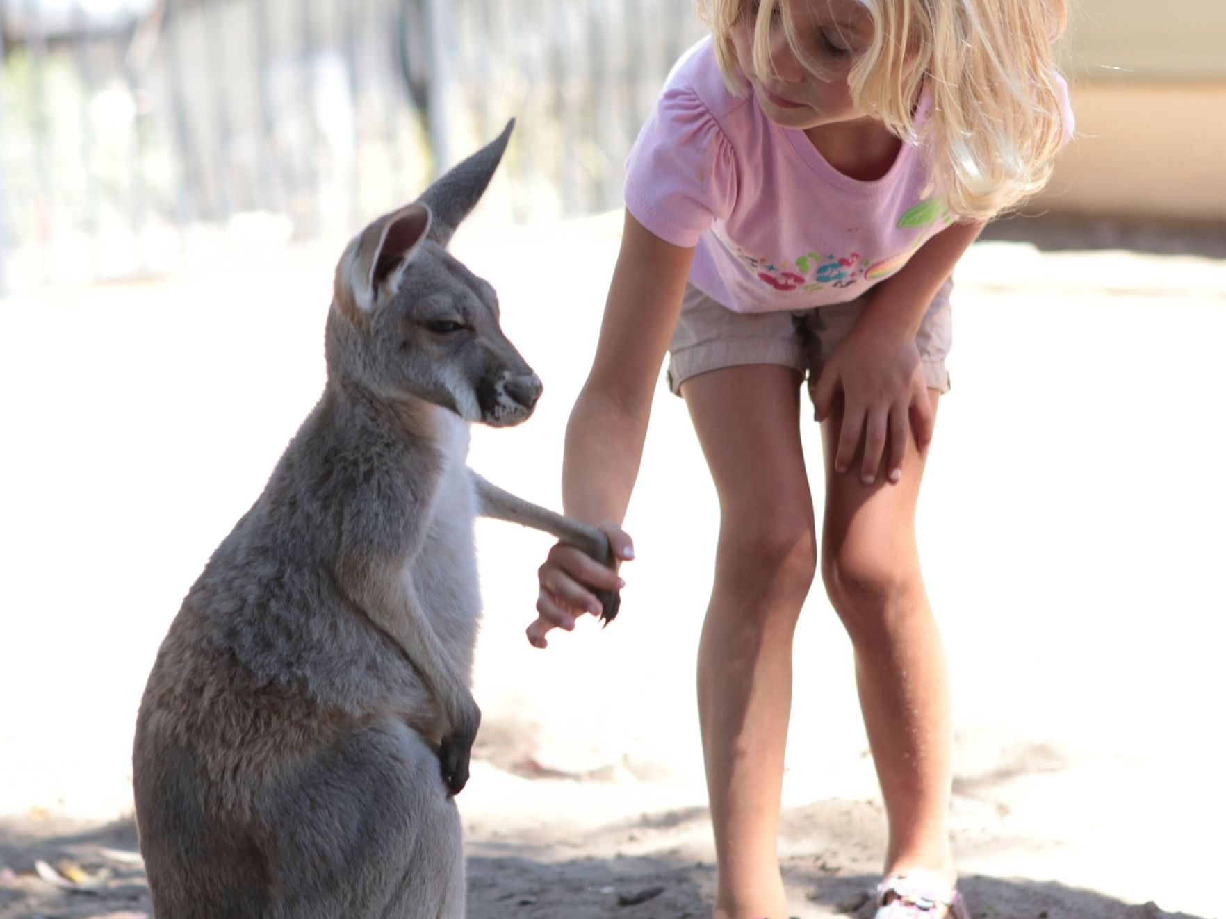 Child with Kangaroo