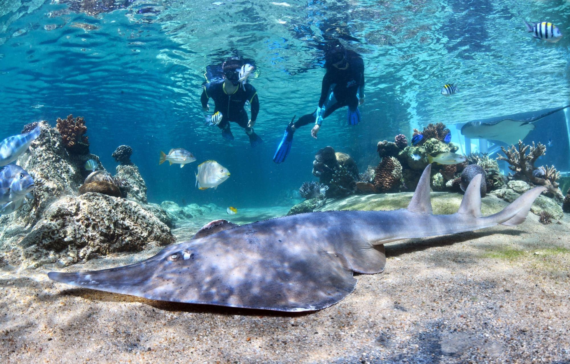 People exploring reefs in deep sea near Daydream Island Resort