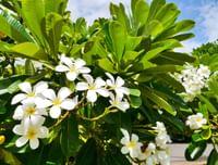 Flowers at Waimea Plantation Cottages