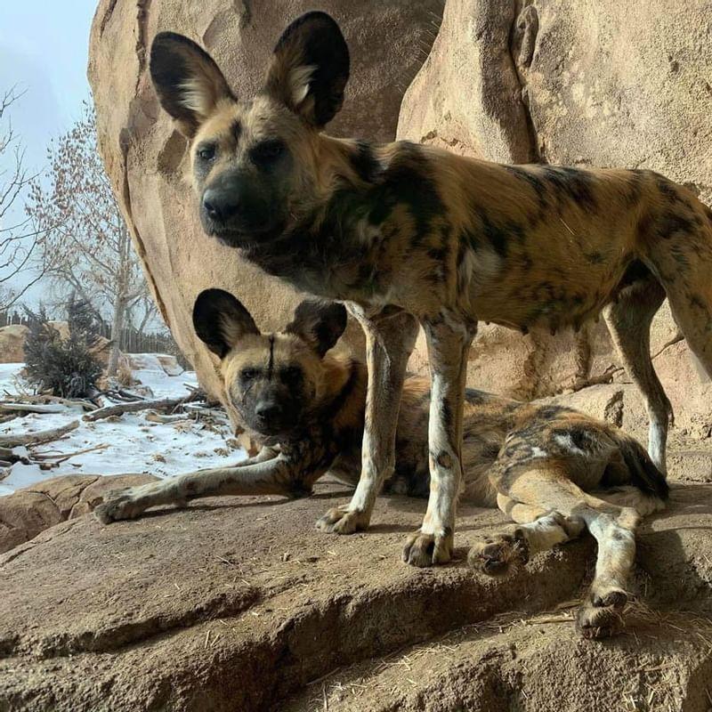 Denver Zoo - WARWICK CORPORATE