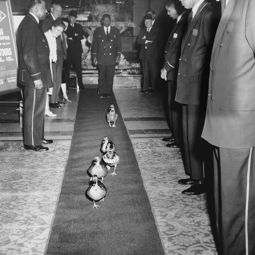 1947 image of Peabody Ducks at Peabody Hotels & Resorts