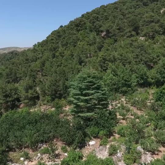 Horsh Ehden Nature Reserve - WARWICK CORPORATE